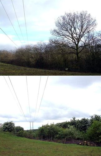 Before-and-after-tree-clearance-railway