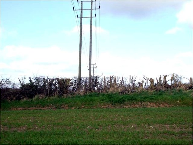 Warwick-2014-tree-clearance-power-line-1