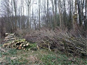 Northampton-2014-tree-clearing