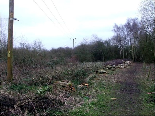 Northampton-2014-cleared-trees-2
